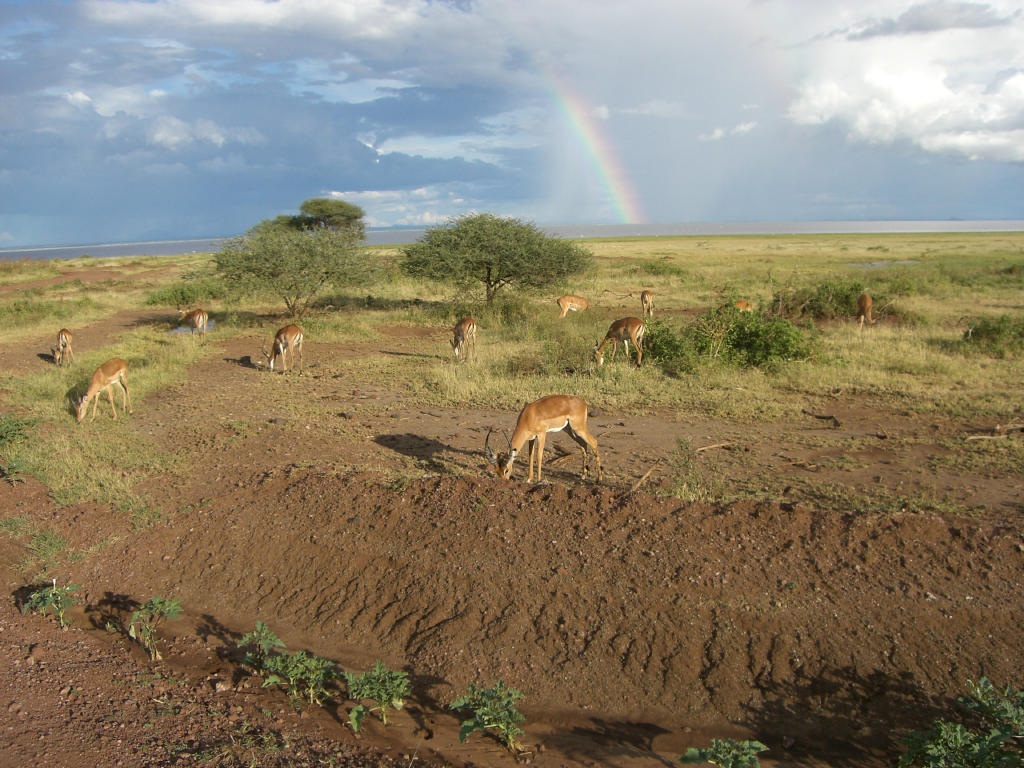 Manyara-See Nationalpark Tansania