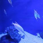 fische aquarium genua