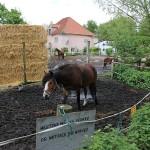 Bauernhof, Christiania, Pferde, Kopenhagen