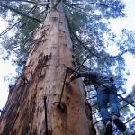Karribäume Aussicht Australien