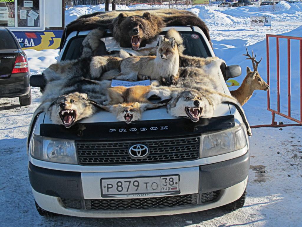Wölfe und Bären im Sonderangebot!
