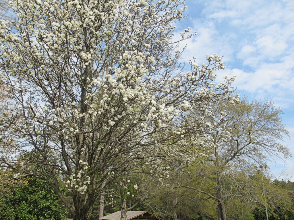 Den Frühling konnte ich hier nur für knapp zwei Stunden bewundern.