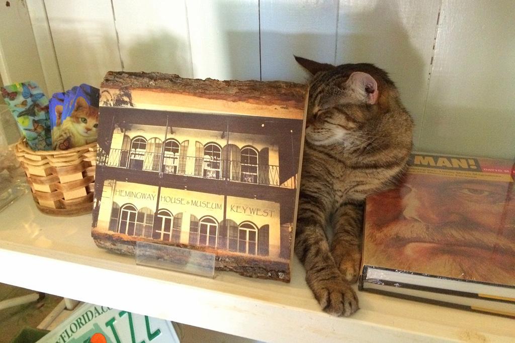 Das Haus von Hemingway ist heute von den Nachfahren seiner Katzen bewohnt.