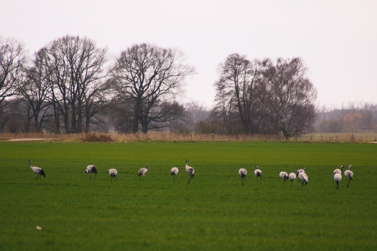 Die flachen Felder in Brandenburg finden auch die Vögel geil.