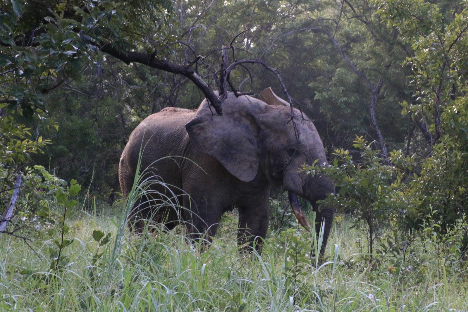 Hier hatte sich der Elefant versteckt.