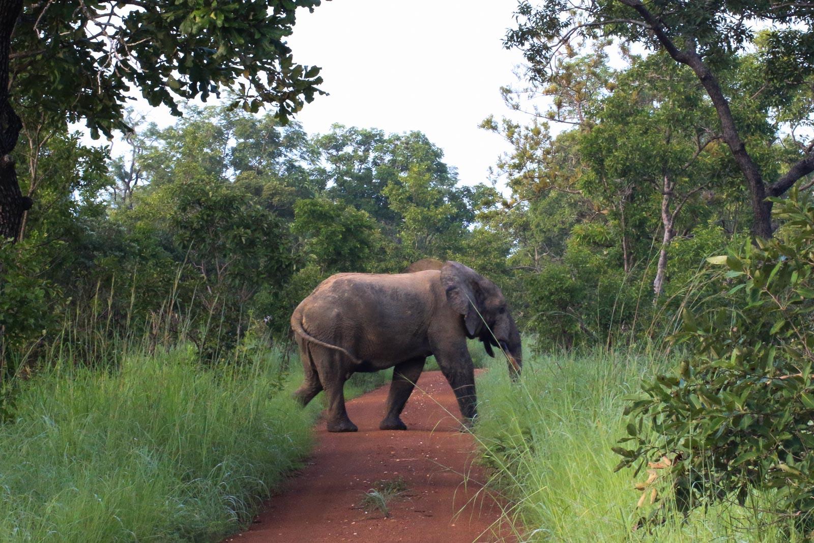 Elefanten sind zwar die größten Tiere im Mole National Park aber bei weitem nicht die einzigen.