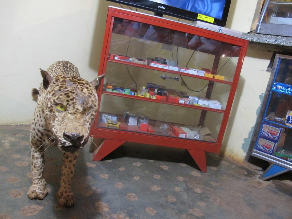 Sogar wilde Tiere gibt es in Venezuela!