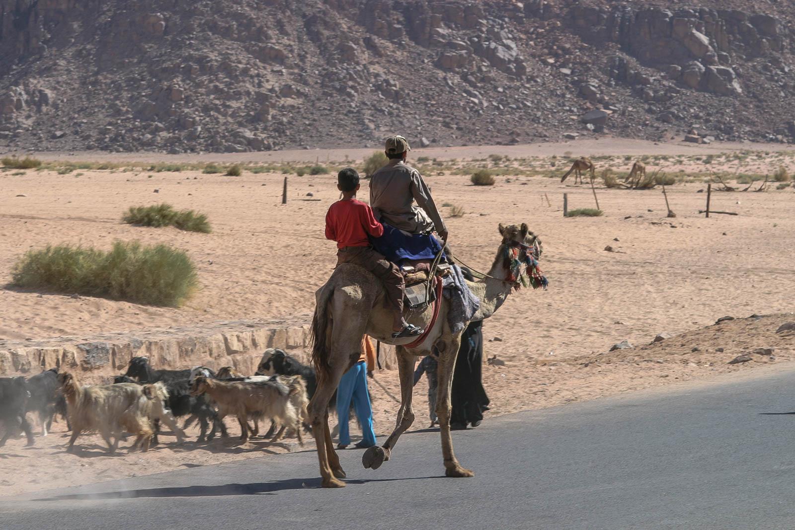 Neben der Jeep Tour durch das Wadi Rum gibt es auch Touren mit dem Kamel.