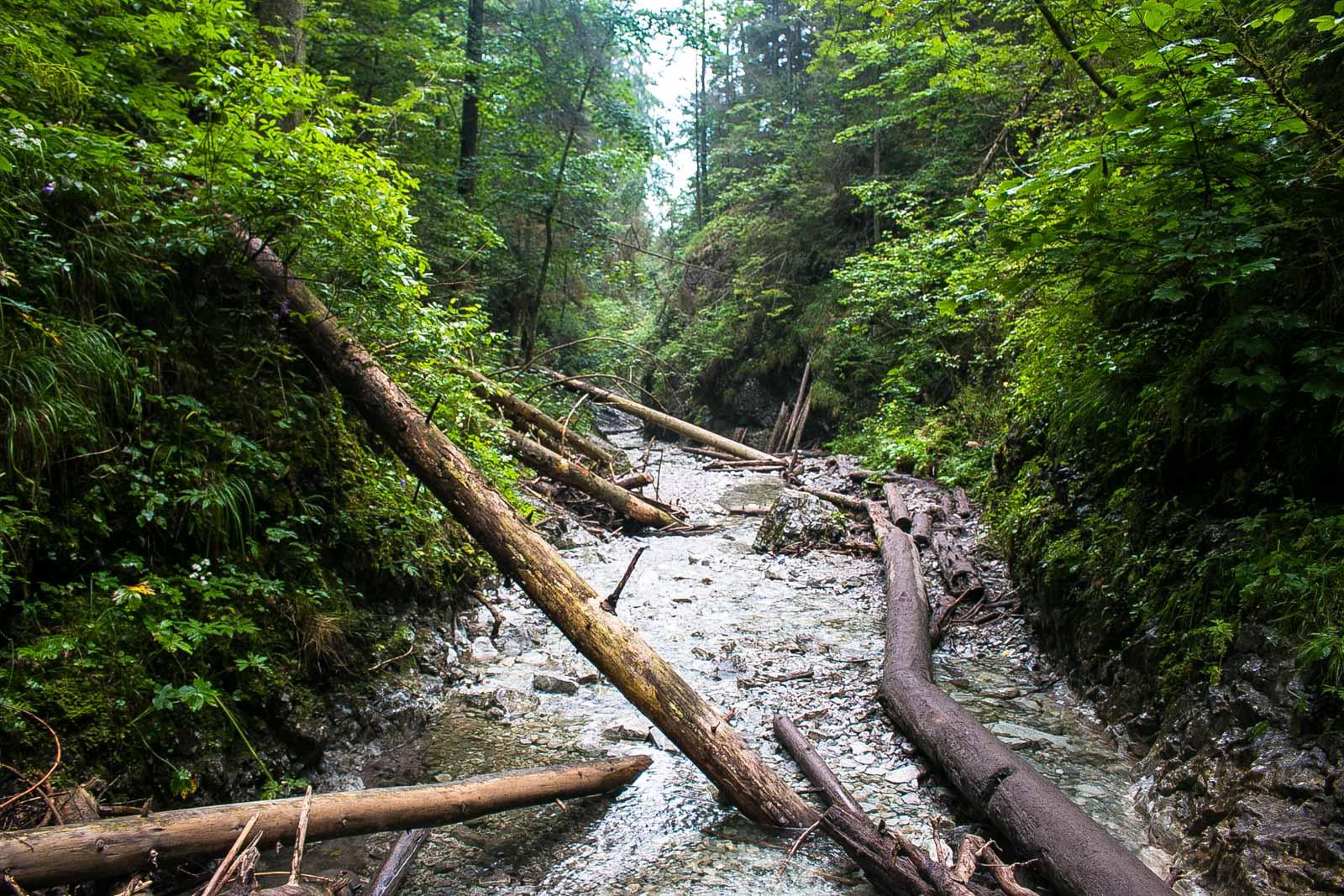 Sucha Bela Bäume Slovensky Raj