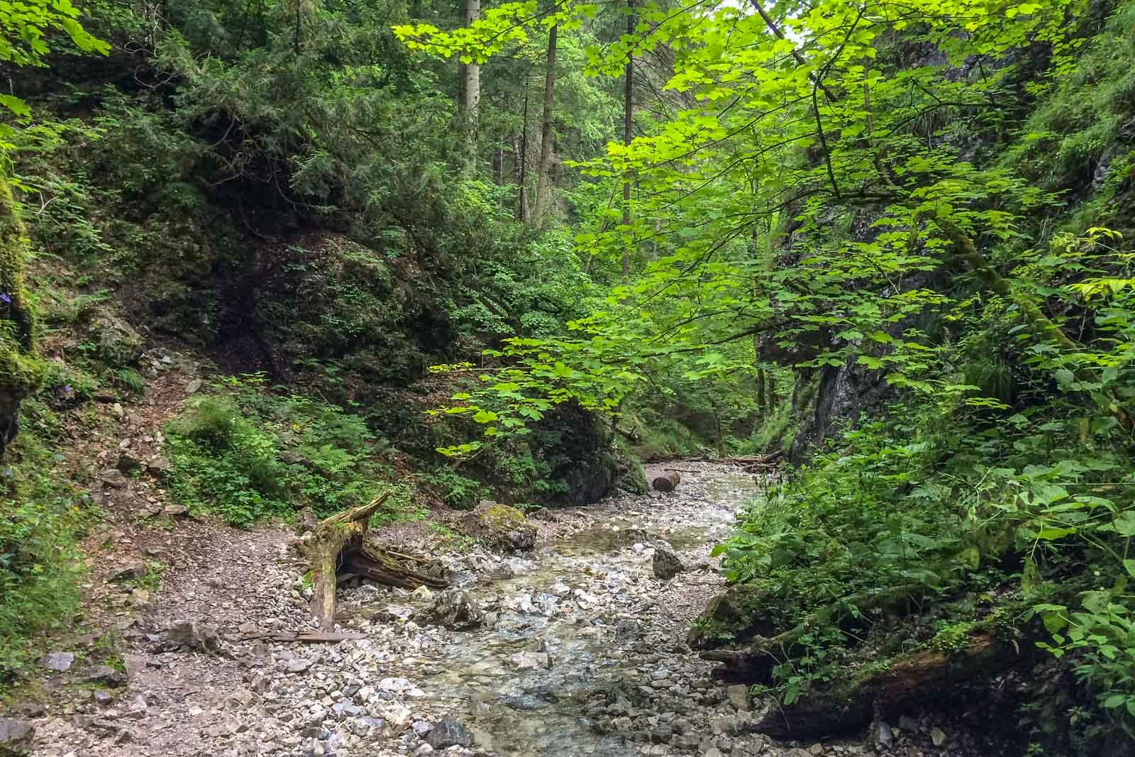 Slowakisches Paradies Wald